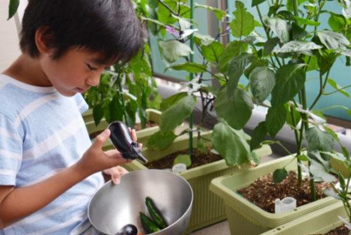 子どもと一緒に植物を育てたり庭仕事をしよう